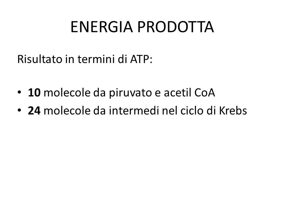 ENERGIA PRODOTTA Risultato in termini di ATP: 10 molecole da piruvato e acetil CoA 24 molecole da intermedi nel ciclo di Krebs