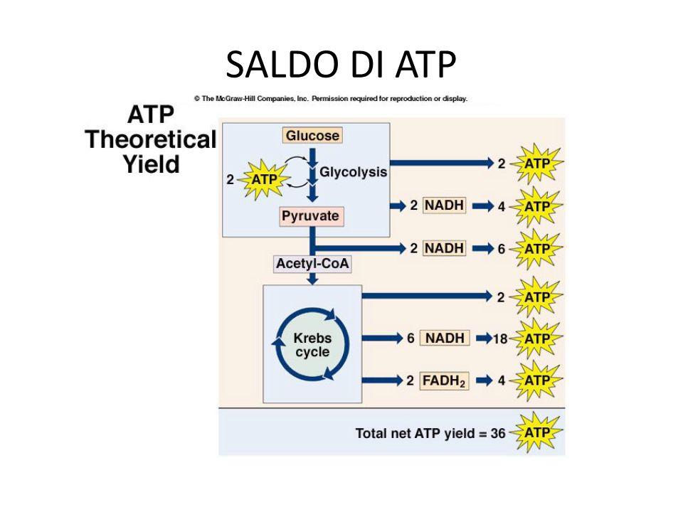 SALDO DI ATP