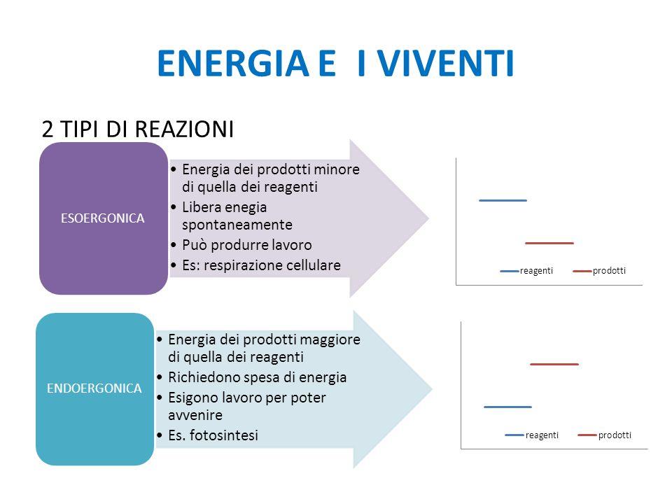 ENERGIA E I VIVENTI 2 TIPI DI REAZIONI Energia dei prodotti minore di quella dei reagenti Libera enegia spontaneamente Può produrre lavoro Es: respira