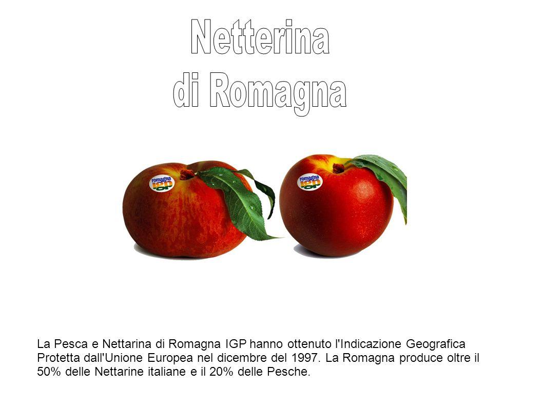 La Pesca e Nettarina di Romagna IGP hanno ottenuto l Indicazione Geografica Protetta dall Unione Europea nel dicembre del 1997.
