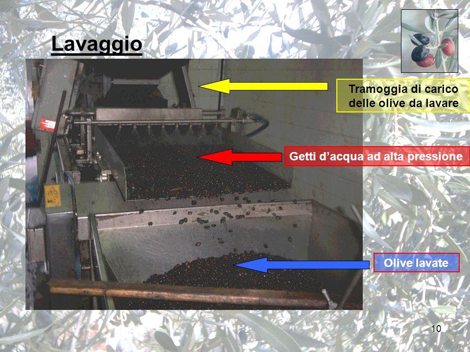 10 Lavaggio Getti d'acqua ad alta pressione Tramoggia di carico delle olive da lavare Olive lavate