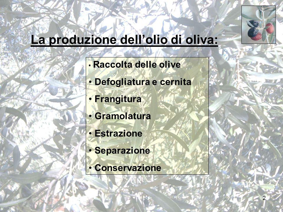 2 La produzione dell'olio di oliva: Raccolta delle olive Defogliatura e cernita Frangitura Gramolatura Estrazione Separazione Conservazione