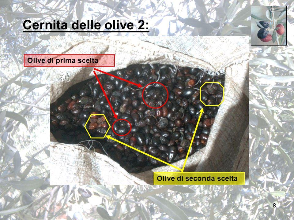 8 Cernita delle olive 2: Olive di prima scelta Olive di seconda scelta