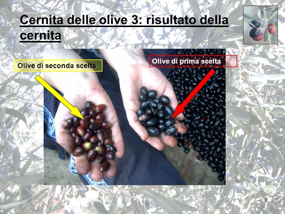 9 Cernita delle olive 3: risultato della cernita Olive di seconda scelta Olive di prima scelta