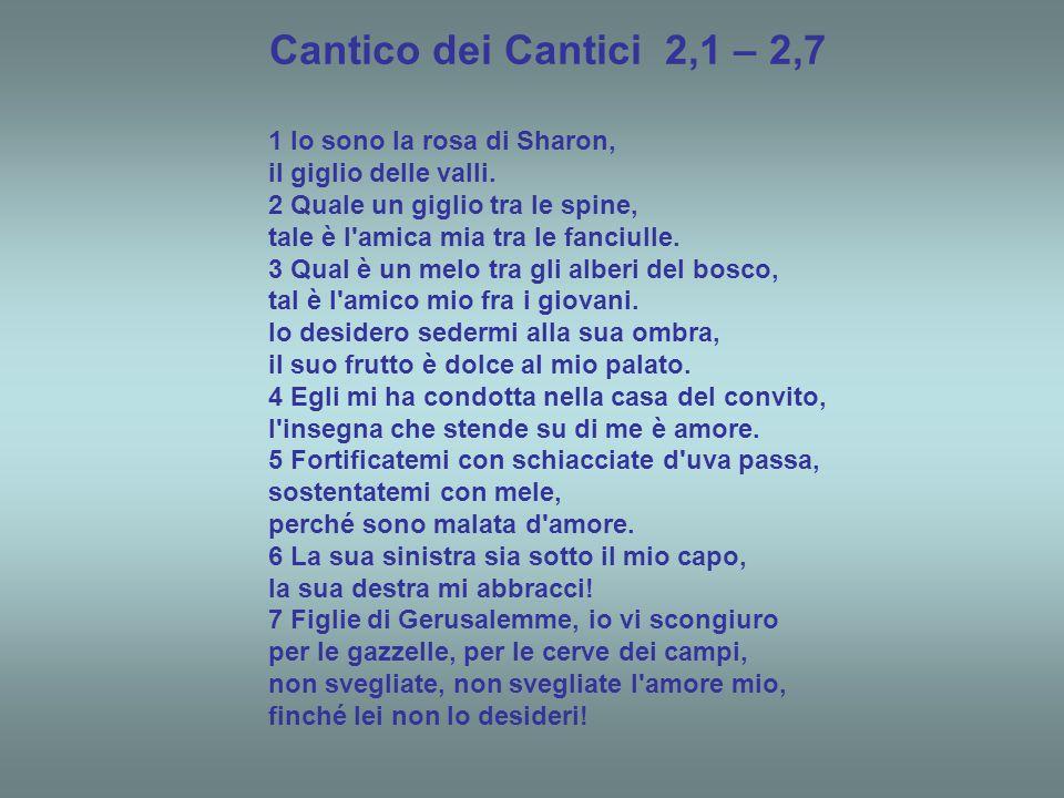 """Salomone - Cantico dei Cantici 2,1 """" Rosa di Sharon"""""""