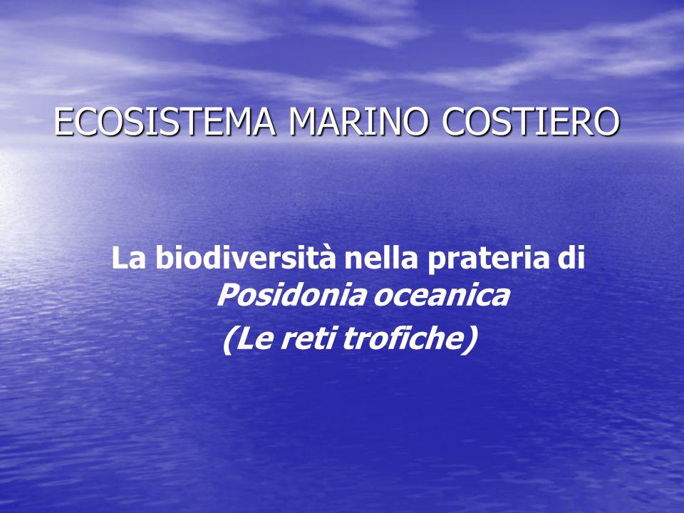 ECOSISTEMA MARINO COSTIERO La biodiversità nella prateria di Posidonia oceanica (Le reti trofiche)