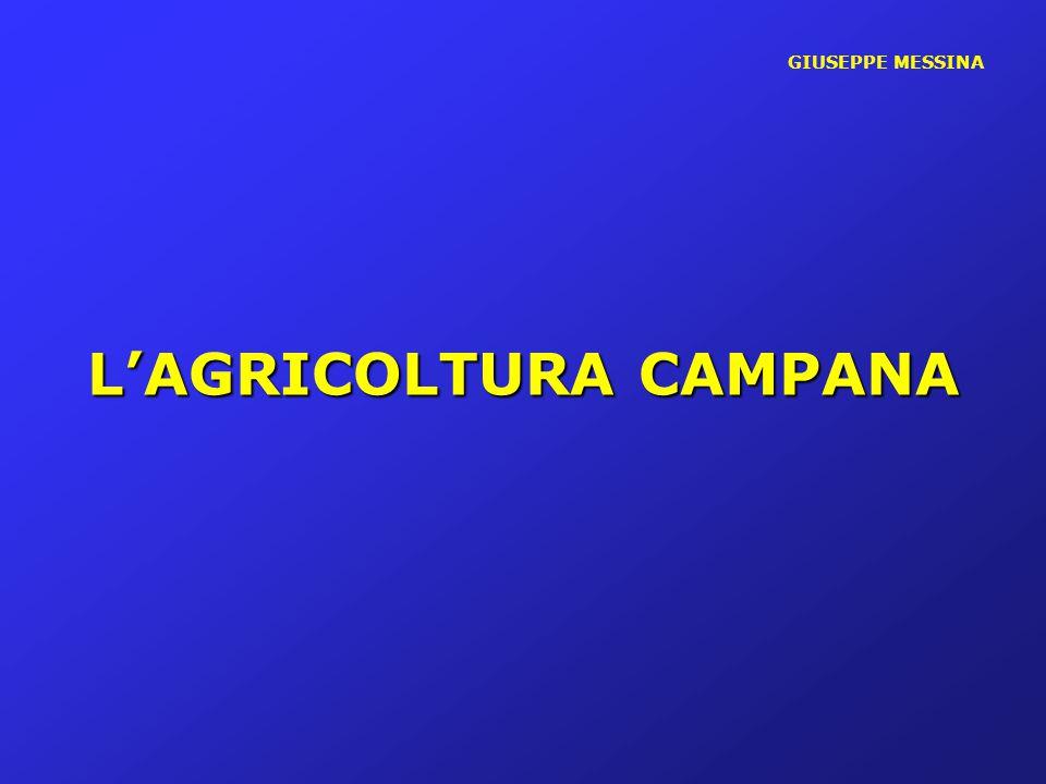 GIUSEPPE MESSINA LA VOCAZIONE PRODUTTIVA DEL SETTORE AGRICOLO CAMPANO E' QUELLA TIPICA DI UN SISTEMA AD AVANZATO LIVELLO DI SPECIALIZZAZIONE PRODUTTIVA - MODELLO DI AGRICOLTURA INTENSIVA -ELEVATA PRODUTTIVITA' DELLA TERRA IN TERMINI DI VALORE AGGIUNTO PER ETTARO DI SAU CON APPENA IL 3,18% DELLA SAU ESSA PRODUCE UNA PLV PARI AL 7 % DI QUELLA NAZIONALE, PER UN AMMONTARE DI CIRCA 3 MILIARDI DI EURO