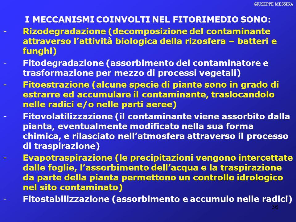 36 GIUSEPPE MESSINA I MECCANISMI COINVOLTI NEL FITORIMEDIO SONO: -Rizodegradazione (decomposizione del contaminante attraverso l'attività biologica de
