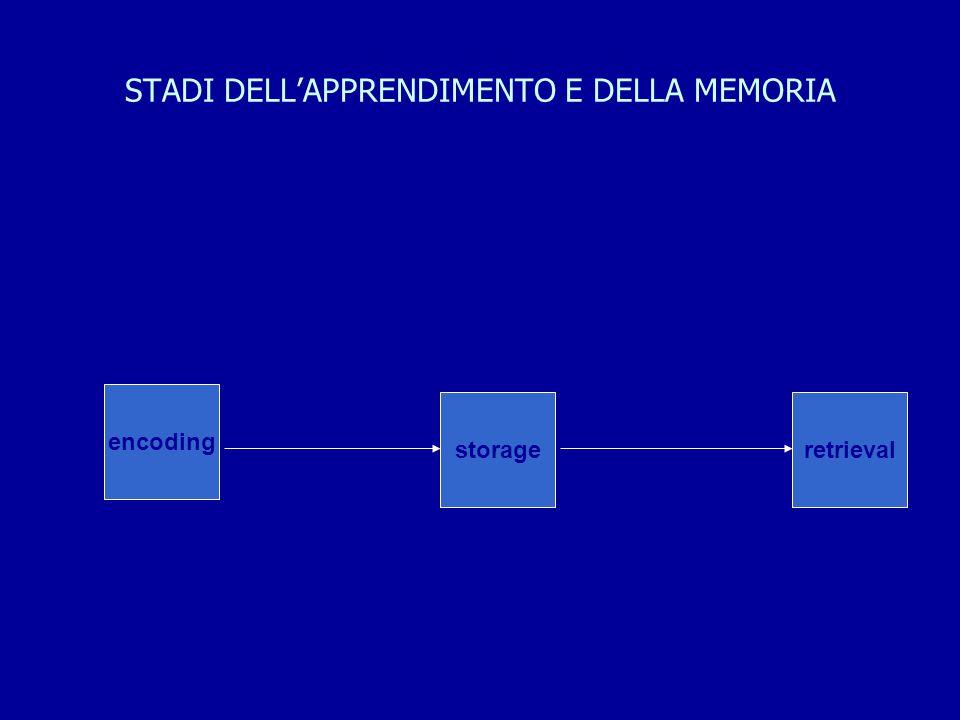 STADI DELL'APPRENDIMENTO E DELLA MEMORIA encoding storageretrieval