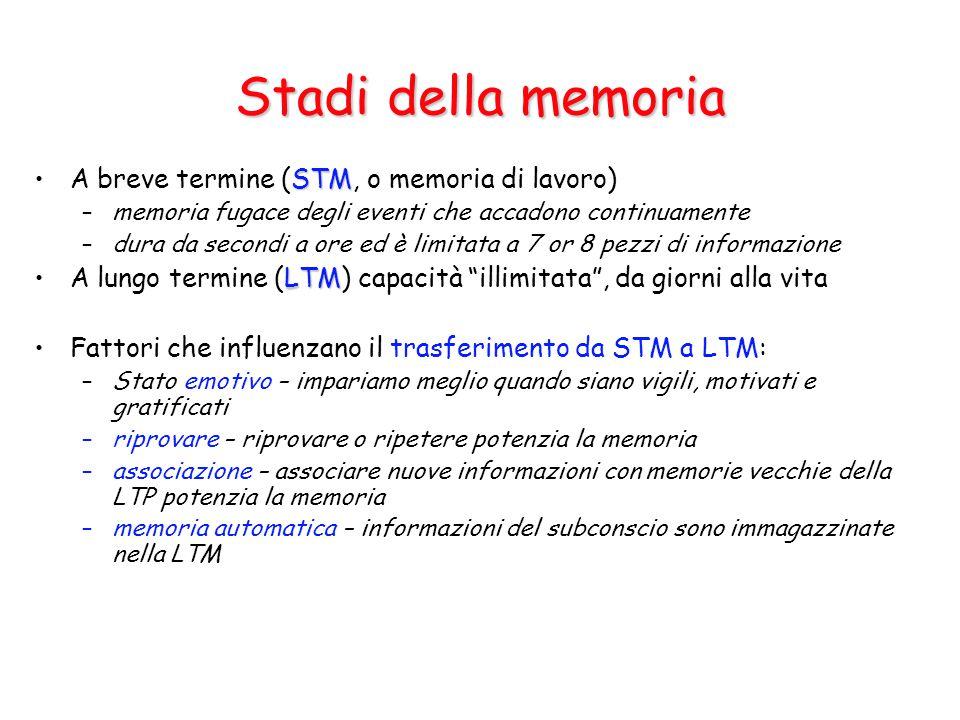 Stadi della memoria STMA breve termine (STM, o memoria di lavoro) –memoria fugace degli eventi che accadono continuamente –dura da secondi a ore ed è limitata a 7 or 8 pezzi di informazione LTMA lungo termine (LTM) capacità illimitata , da giorni alla vita Fattori che influenzano il trasferimento da STM a LTM: –Stato emotivo – impariamo meglio quando siano vigili, motivati e gratificati –riprovare – riprovare o ripetere potenzia la memoria –associazione – associare nuove informazioni con memorie vecchie della LTP potenzia la memoria –memoria automatica – informazioni del subconscio sono immagazzinate nella LTM