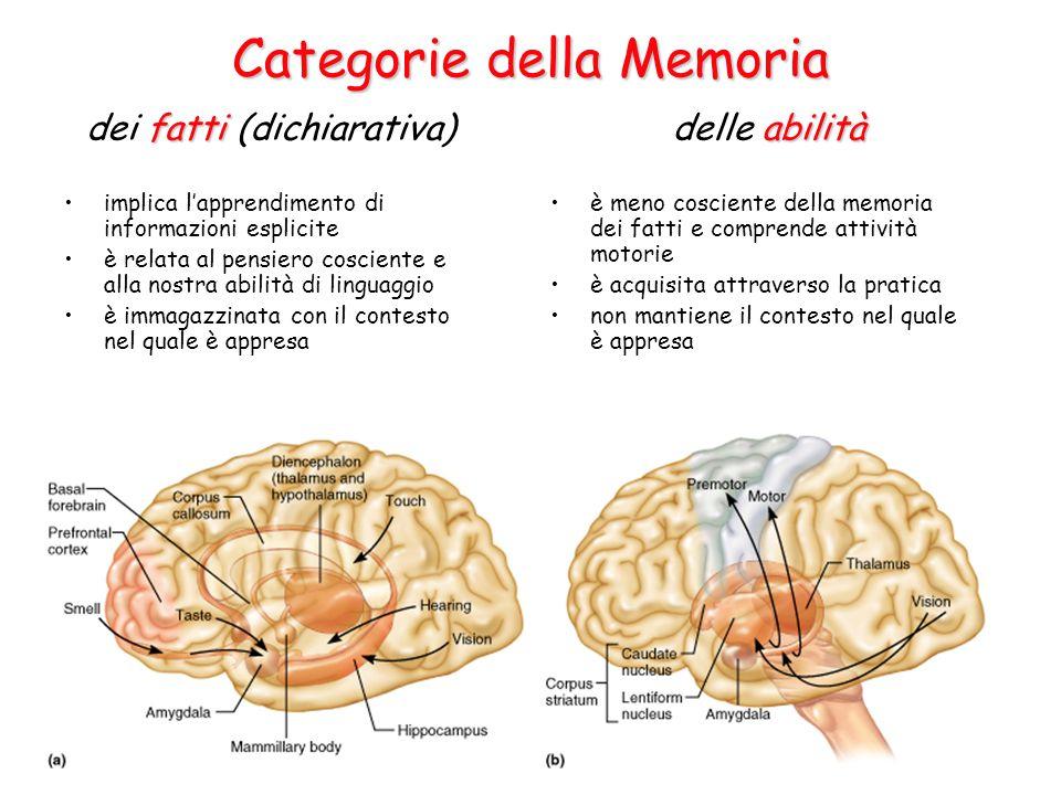Categorie della Memoria implica l'apprendimento di informazioni esplicite è relata al pensiero cosciente e alla nostra abilità di linguaggio è immagazzinata con il contesto nel quale è appresa è meno cosciente della memoria dei fatti e comprende attività motorie è acquisita attraverso la pratica non mantiene il contesto nel quale è appresa fatti dei fatti (dichiarativa) abilità delle abilità