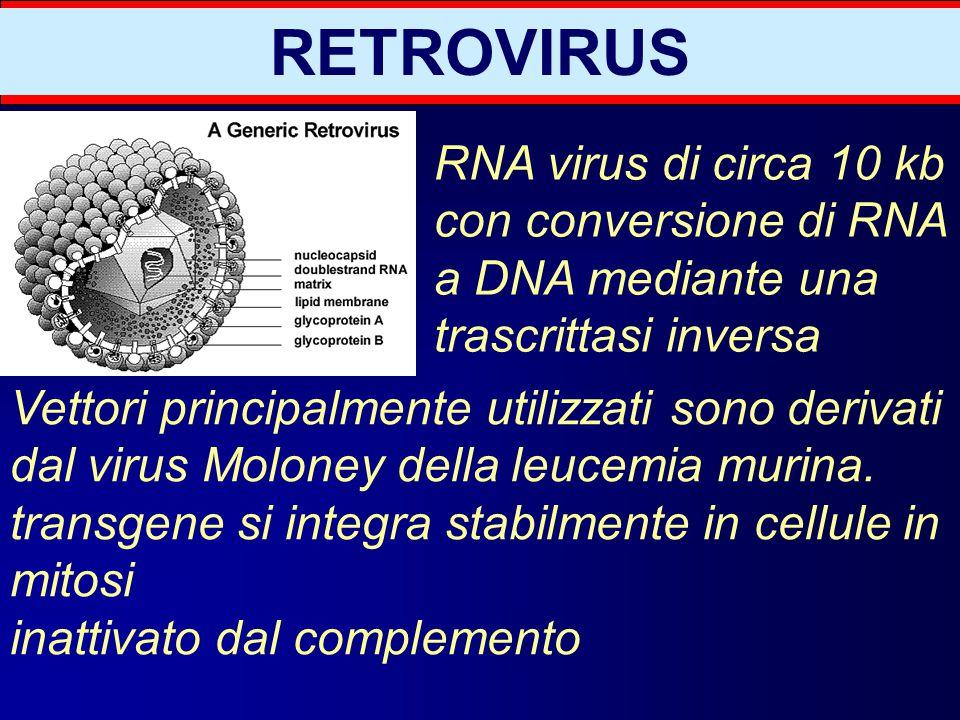 Potenziale tossicità: generazione di virus replicazione- competenti (per ricombinazione in fase di produzione o nell'ospite) mutagenesi inserzionale (tumori?) RETROVIRUS