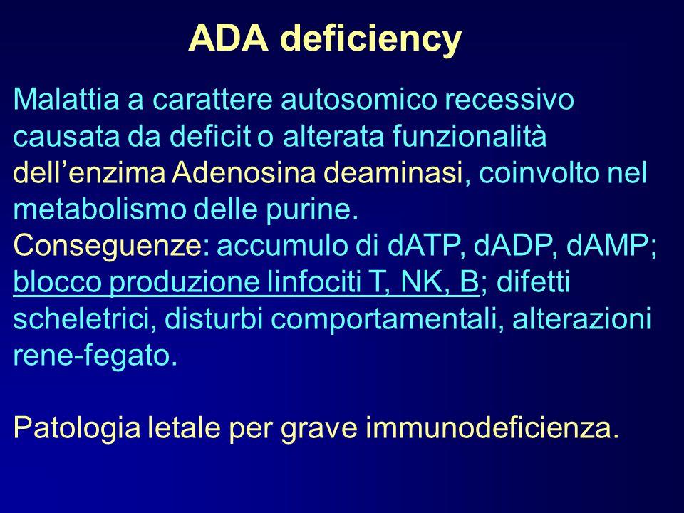 ADA deficiency Possibilità terapeutiche: Trapianto di midollo Terapia sostitutiva: PEG-ADA bovino i.m.