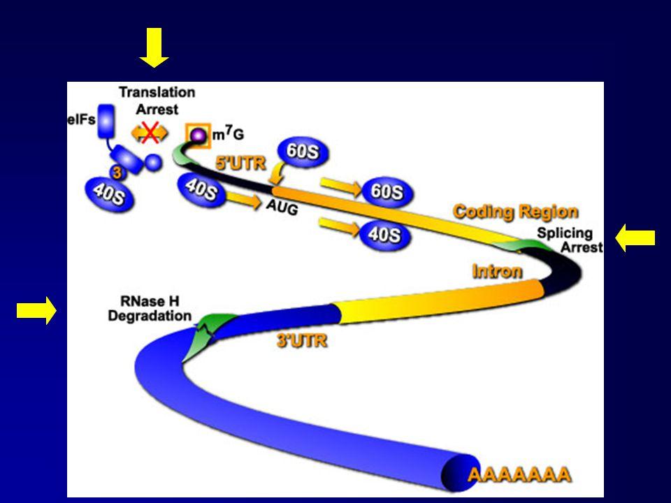 Struttura modificata per aumentare la resistenza alle nucleasi: oligonucleotidi fosforotioati (stabilità in vitro, buona emivita)