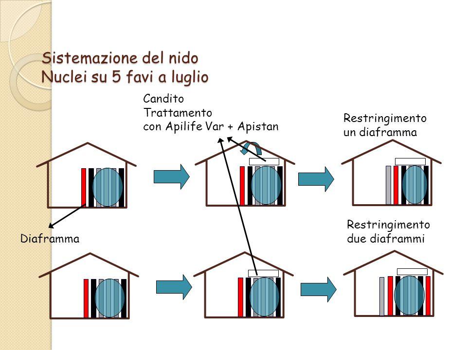 Sistemazione del nido Nuclei su 5 favi a luglio Candito Trattamento con Apilife Var + Apistan Restringimento un diaframma Diaframma Restringimento due diaframmi