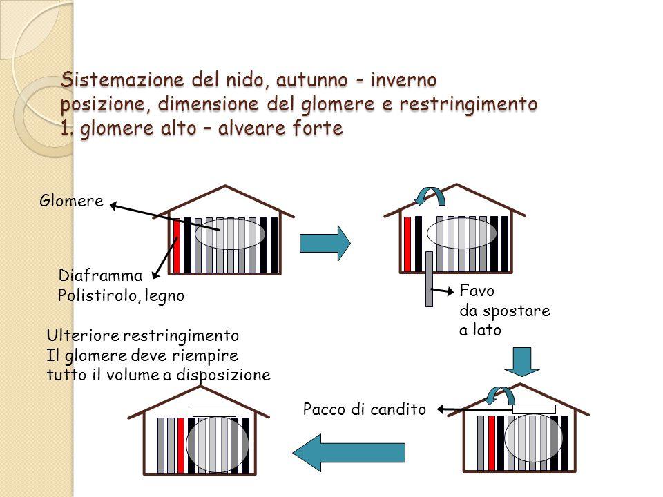 Sistemazione del nido, autunno - inverno posizione, dimensione del glomere e restringimento 1.