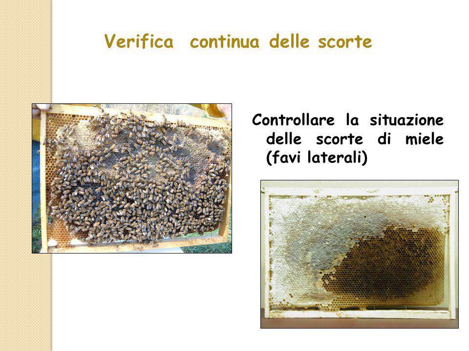 Verifica continua delle scorte Controllare la situazione delle scorte di miele (favi laterali)