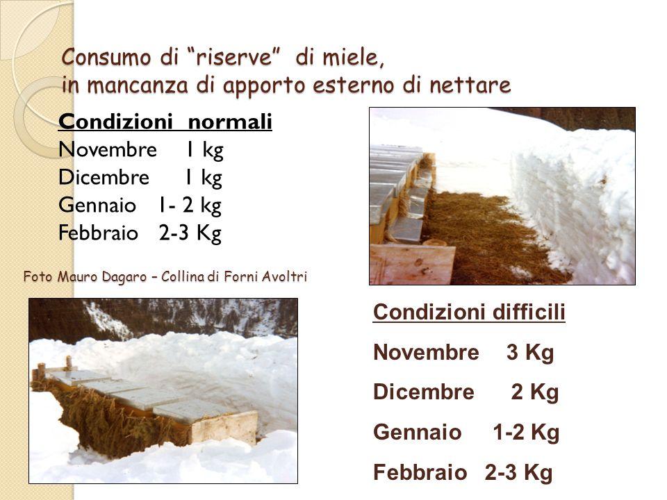 Consumo di riserve di miele, in mancanza di apporto esterno di nettare Condizioni normali Novembre 1 kg Dicembre 1 kg Gennaio 1- 2 kg Febbraio 2-3 Kg Condizioni difficili Novembre 3 Kg Dicembre 2 Kg Gennaio 1-2 Kg Febbraio 2-3 Kg Foto Mauro Dagaro – Collina di Forni Avoltri