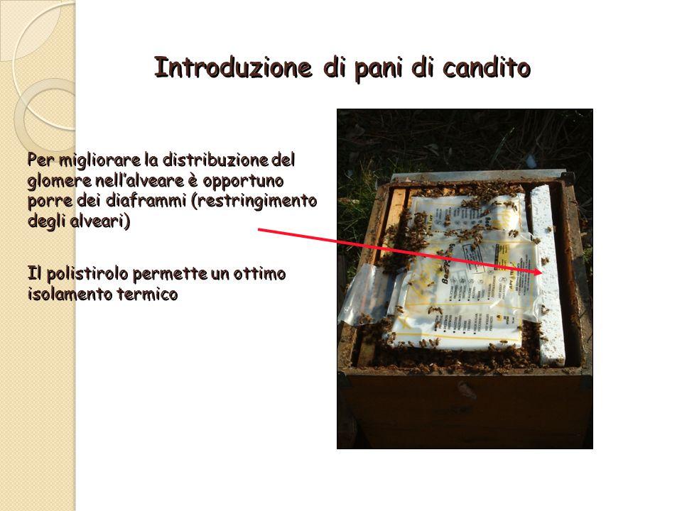 Introduzione di pani di candito Per migliorare la distribuzione del glomere nell'alveare è opportuno porre dei diaframmi (restringimento degli alveari) Il polistirolo permette un ottimo isolamento termico