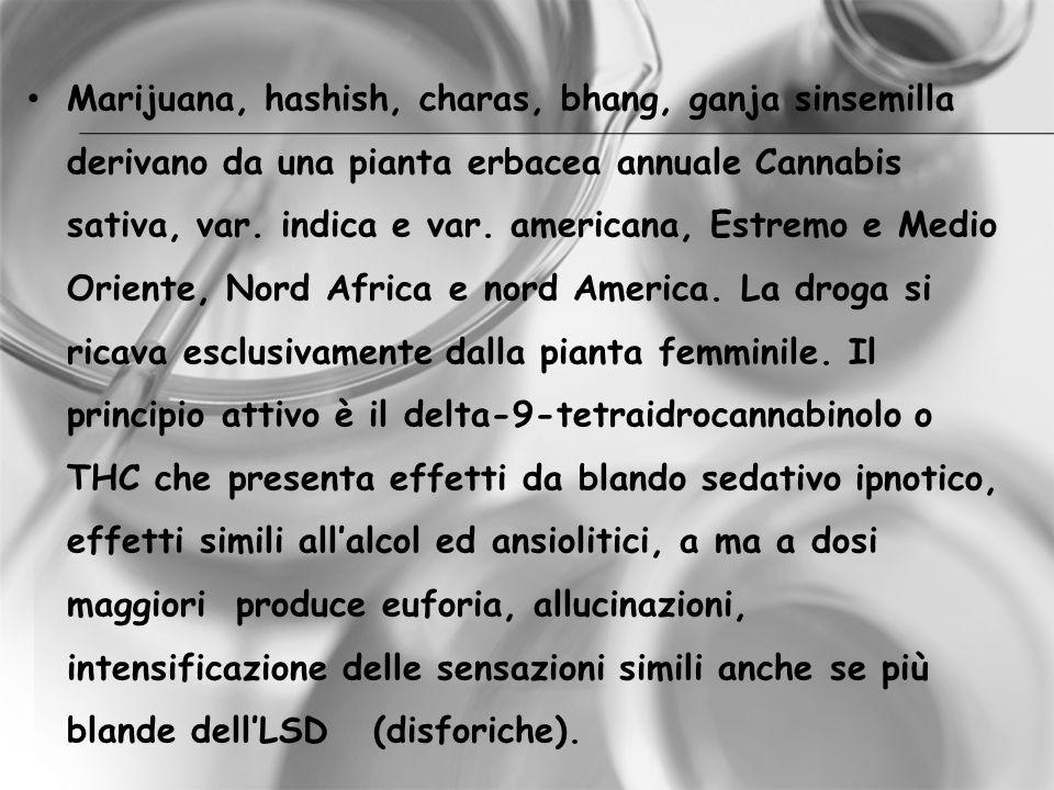 Marijuana, hashish, charas, bhang, ganja sinsemilla derivano da una pianta erbacea annuale Cannabis sativa, var. indica e var. americana, Estremo e Me