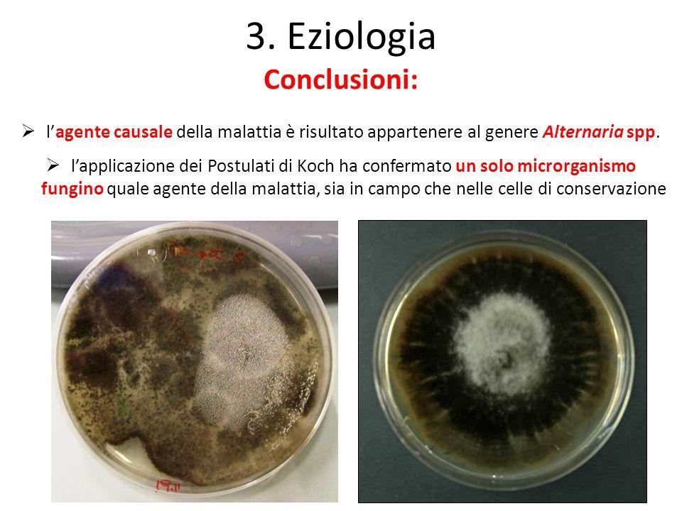 3. Eziologia Conclusioni:  l'agente causale della malattia è risultato appartenere al genere Alternaria spp.  l'applicazione dei Postulati di Koch h