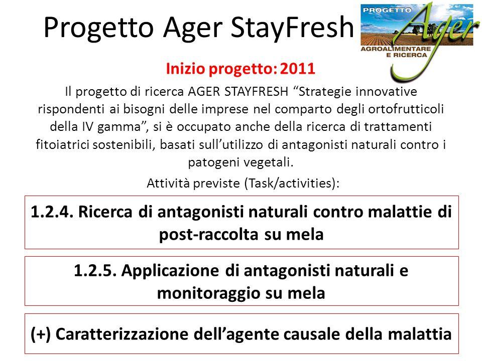 """Inizio progetto: 2011 Il progetto di ricerca AGER STAYFRESH """"Strategie innovative rispondenti ai bisogni delle imprese nel comparto degli ortofruttico"""