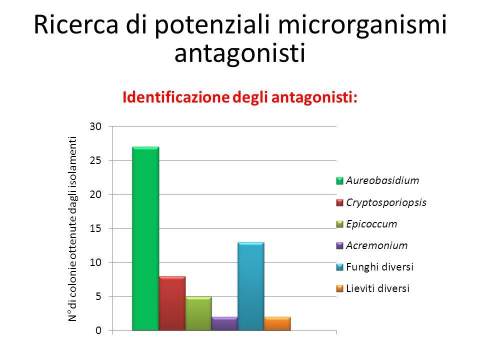 Identificazione degli antagonisti: N°di colonie ottenute dagli isolamenti Ricerca di potenziali microrganismi antagonisti