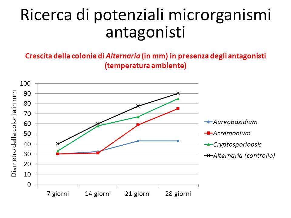 Crescita della colonia di Alternaria (in mm) in presenza degli antagonisti (temperatura ambiente) Diametro della colonia in mm Ricerca di potenziali m