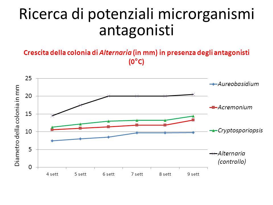 Crescita della colonia di Alternaria (in mm) in presenza degli antagonisti (0°C) Diametro della colonia in mm Ricerca di potenziali microrganismi anta