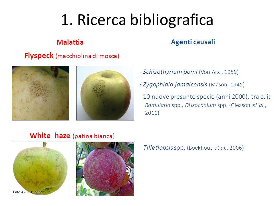 Malattia - Schizothyrium pomi (Von Arx, 1959) - Zygophiala jamaicensis (Mason, 1945) - 10 nuove presunte specie (anni 2000), tra cui: Ramularia spp.,