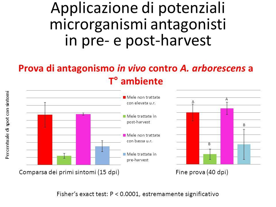 Prova di antagonismo in vivo contro A. arborescens a T° ambiente Comparsa dei primi sintomi (15 dpi)Fine prova (40 dpi) Percentuale di spot con sintom