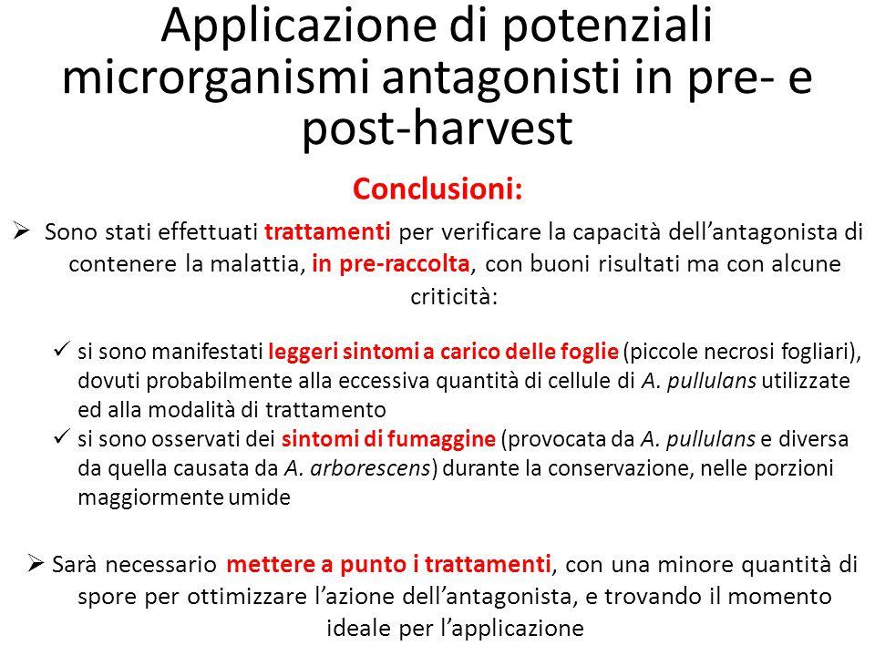 Applicazione di potenziali microrganismi antagonisti in pre- e post-harvest Conclusioni:  Sono stati effettuati trattamenti per verificare la capacit