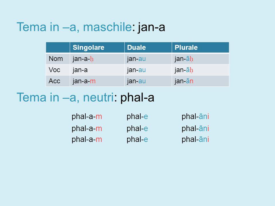 Tema in –a, maschile: jan-a Tema in –a, neutri: phal-a phal-a-mphal-ephal-āni SingolareDualePlurale Nom jan-a- ḥ jan-au jan-ā ḥ Vocjan-ajan-au jan-ā ḥ Accjan-a-mjan-aujan-ān