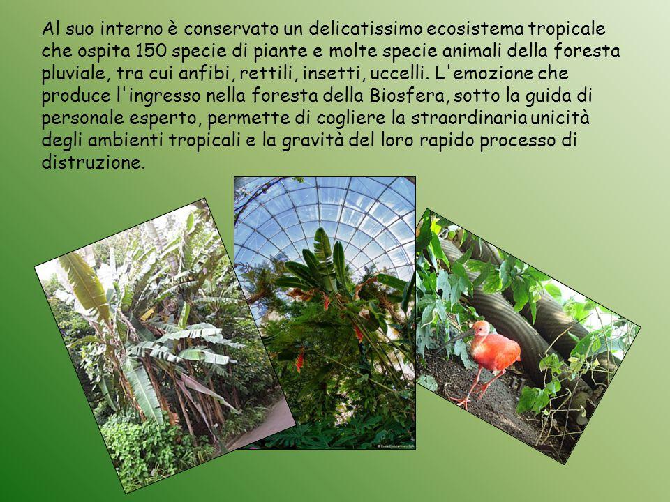 Al suo interno è conservato un delicatissimo ecosistema tropicale che ospita 150 specie di piante e molte specie animali della foresta pluviale, tra c