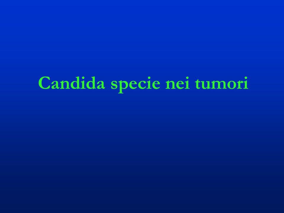 Candida specie nei tumori