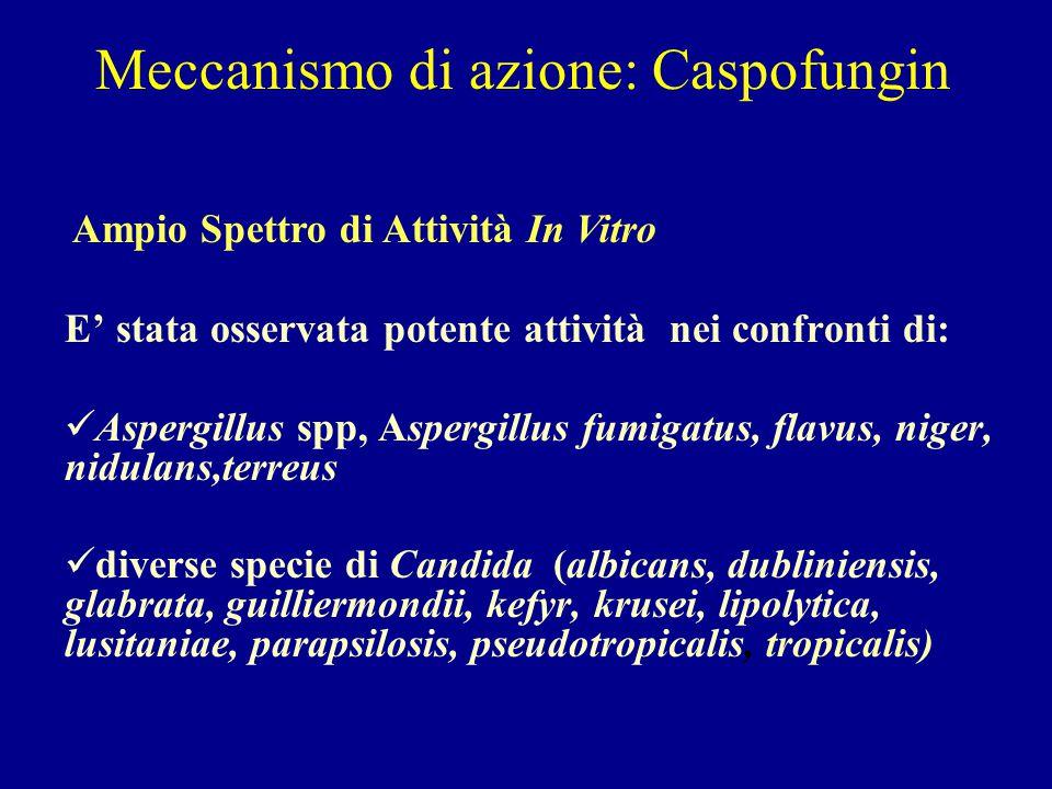 Meccanismo di azione: Caspofungin Ampio Spettro di Attività In Vitro E' stata osservata potente attività nei confronti di: Aspergillus spp, Aspergillu