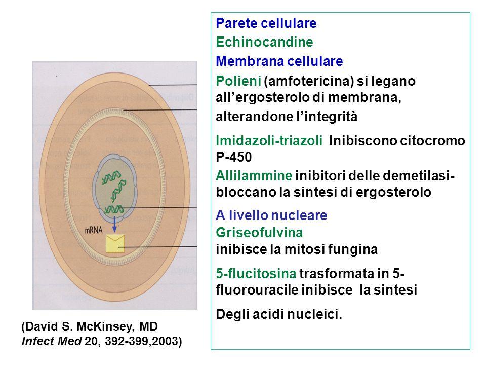 Parete cellulare Echinocandine Membrana cellulare Polieni (amfotericina) si legano all'ergosterolo di membrana, alterandone l'integrità Imidazoli-tria
