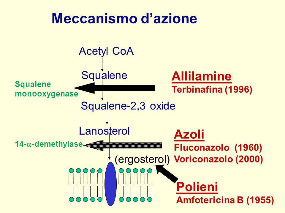 Acetyl CoA Squalene Lanosterol (ergosterol) Allilamine Terbinafina (1996) Azoli Fluconazolo (1960) Voriconazolo (2000) Squalene-2,3 oxide Squalene mon