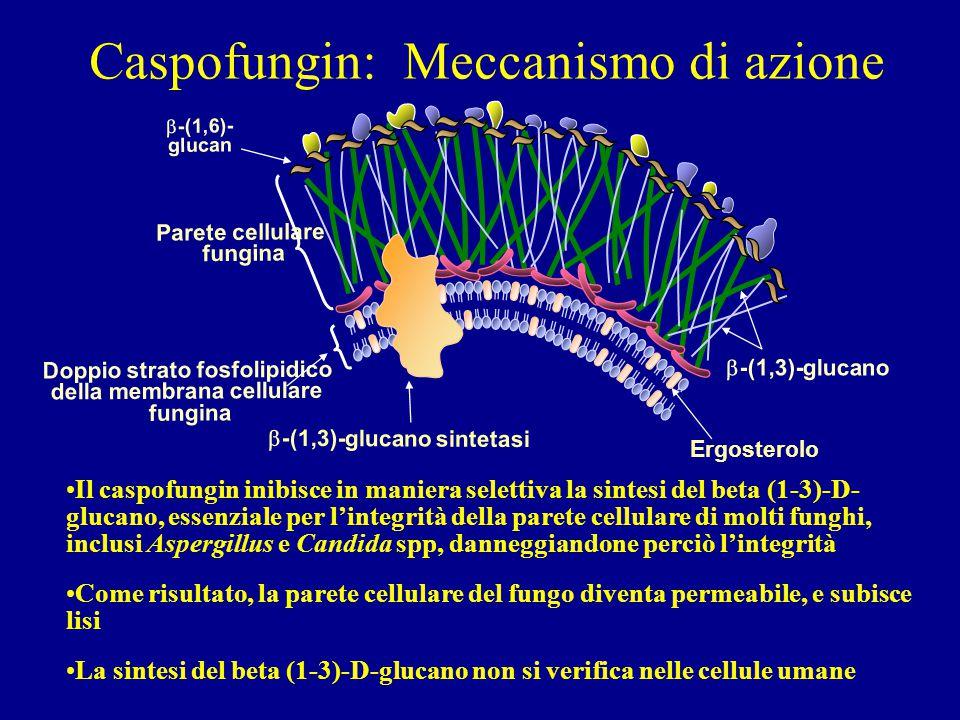 Doppio strato fosfolipidico della membrana cellulare fungina Parete cellulare fungina  -(1,3)-glucano  -(1,6)- glucan  -(1,3)-glucano sintetasi Erg