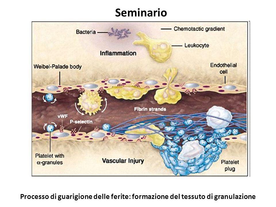 http://www.bio.davidson.edu/courses/immunology/students/spring2006/latting/Picture%20005.jpg