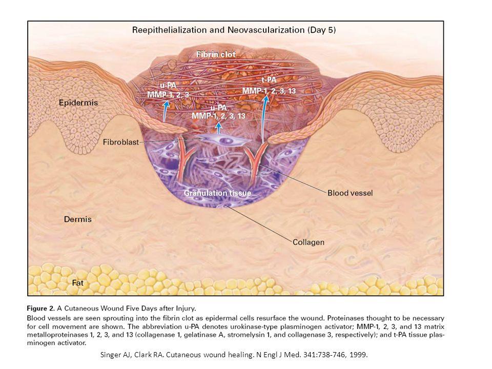 http://www.med.monash.edu.au/assets/images/immunology/lab-heads/imm-inflame.jpg