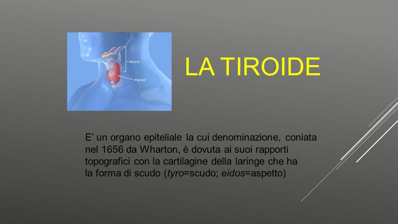 LA TIROIDE E' un organo epiteliale la cui denominazione, coniata nel 1656 da Wharton, è dovuta ai suoi rapporti topografici con la cartilagine della l