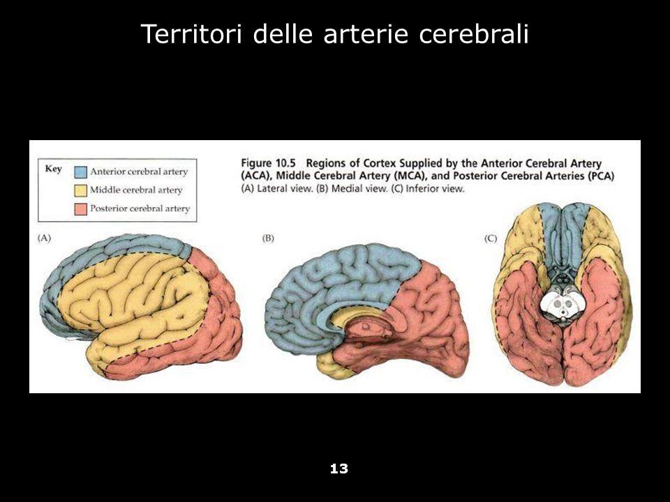 Vallar, Papagno (a cura di), Manuale di neuropsicologia, Il Mulino, 2011 Capitolo IV. ELEMENTI DI NEUROLOGIA 13 Territori delle arterie cerebrali