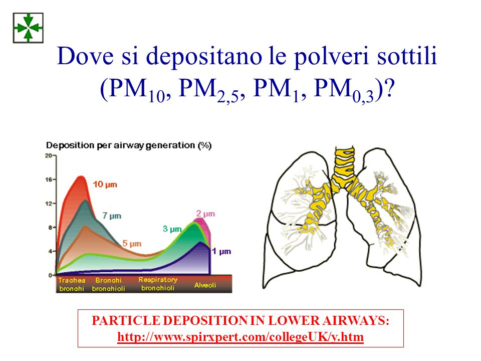 Dove si depositano le polveri sottili (PM 10, PM 2,5, PM 1, PM 0,3 )? PARTICLE DEPOSITION IN LOWER AIRWAYS: http://www.spirxpert.com/collegeUK/y.htm h