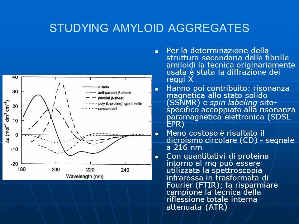 SCREENING ON AMYLOID AGGREGATES Test del Congo red (CR) – segnale a 540 nm, descritto oltre 50 anni fa Dosaggio fluorimetrico tramite tioflavina T (ThT) – segnale a 485 nm, in seguito a red-shift