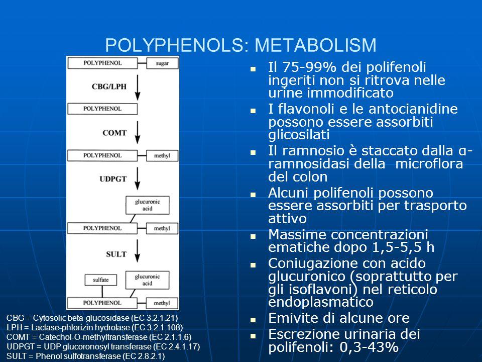 POLYPHENOLS: BIOLOGICAL ACTIVITIES I polifenoli sono usati come antiossidanti per preparati farmaceutici e alimentari (l'epicatechina gallato è la più efficace) L'ossidazione delle LDL sembra essere un fenomeno aterogenetico (i radicali liberi dell'ossigeno - ROS - sono in grado di perossidare gli acidi grassi polinsaturi); inoltre i polifenoli inducono vasodilatazione Paradosso francese I polifenoli sono stati testati contro il melanoma, i tumori della prostata e del seno I flavonoidi potrebbero essere impiegati contro la resistenza multipla alla chemioterapia dovuta al trasporto attivo (vedi glicoproteina P) fuori dalla cellula dei farmaci Alcuni polifenoli sono antifungini Antibatterici polifenolici sono noti da oltre 30 anni Alcuni polifenoli sono attivi contro virus erpetici, influenzali, dell'immunodeficienza I polifenoli si possono legare a proteine, glicidi, vitamine e minerali
