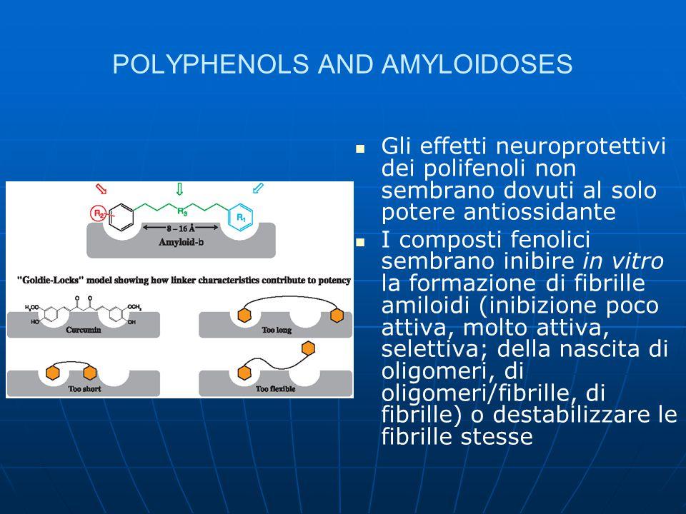 CONCLUSIONS I polifenoli sembrano dare tossicità a lungo termine solo quando rappresentano l'1-5% dell'alimentazione Composti molto attivi come inibitori dell'aggregazione amiloide sono l'acido tannico e l'acido rosmarinico fra gli acidi fenolici, e l'epigallocatechina gallato, la keracianina, l'hinokiflavone e il cumestrolo fra i flavonoidi La coesistenza di più di una struttura fenolica (con molteplici possibilità di legami a idrogeno) sembra essere un requisito indispensabile In particolare gli antociani, stabili a livello gastrico, dove sono in parte già assorbiti, e in grado di attraversare la barriera ematoencefalica, risultano assai promettenti A livello di estratti vegetali gli effetti antiamiloidogeci sembrano essere più pronti e amplificati Il molecular modeling potrà fornire un valido aiuto nell'allestimento di screening