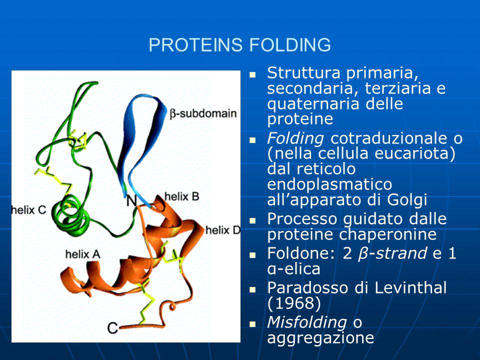 PROTEIC MISFOLDING Aggregazione amiloide delle proteine: deposizione tissutale di strutture proteiche supramolecolari organizzate in foglietti β.