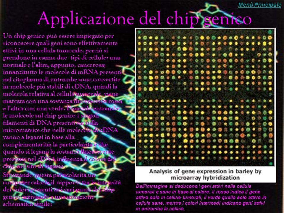 Fondamenti e costruzione di un chip genico Nel caso dei chip genetici la base da cui si parte in sostanza non è un gene ma soprattutto come e quando il determinato gene si attiva.