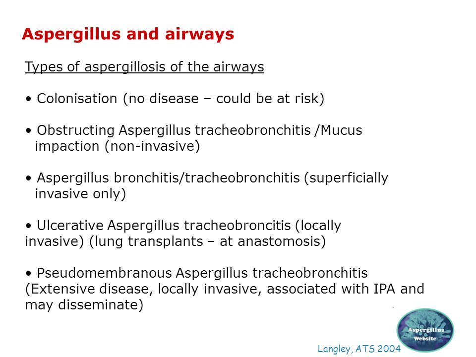 Aspergillus and airways Langley, ATS 2004 Types of aspergillosis of the airways Colonisation (no disease – could be at risk) Obstructing Aspergillus t